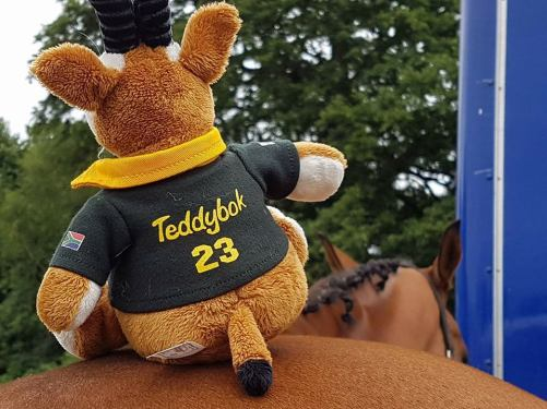 teddybok